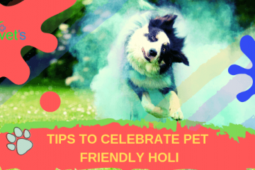 Tips to Celebrate Pet Friendly Holi
